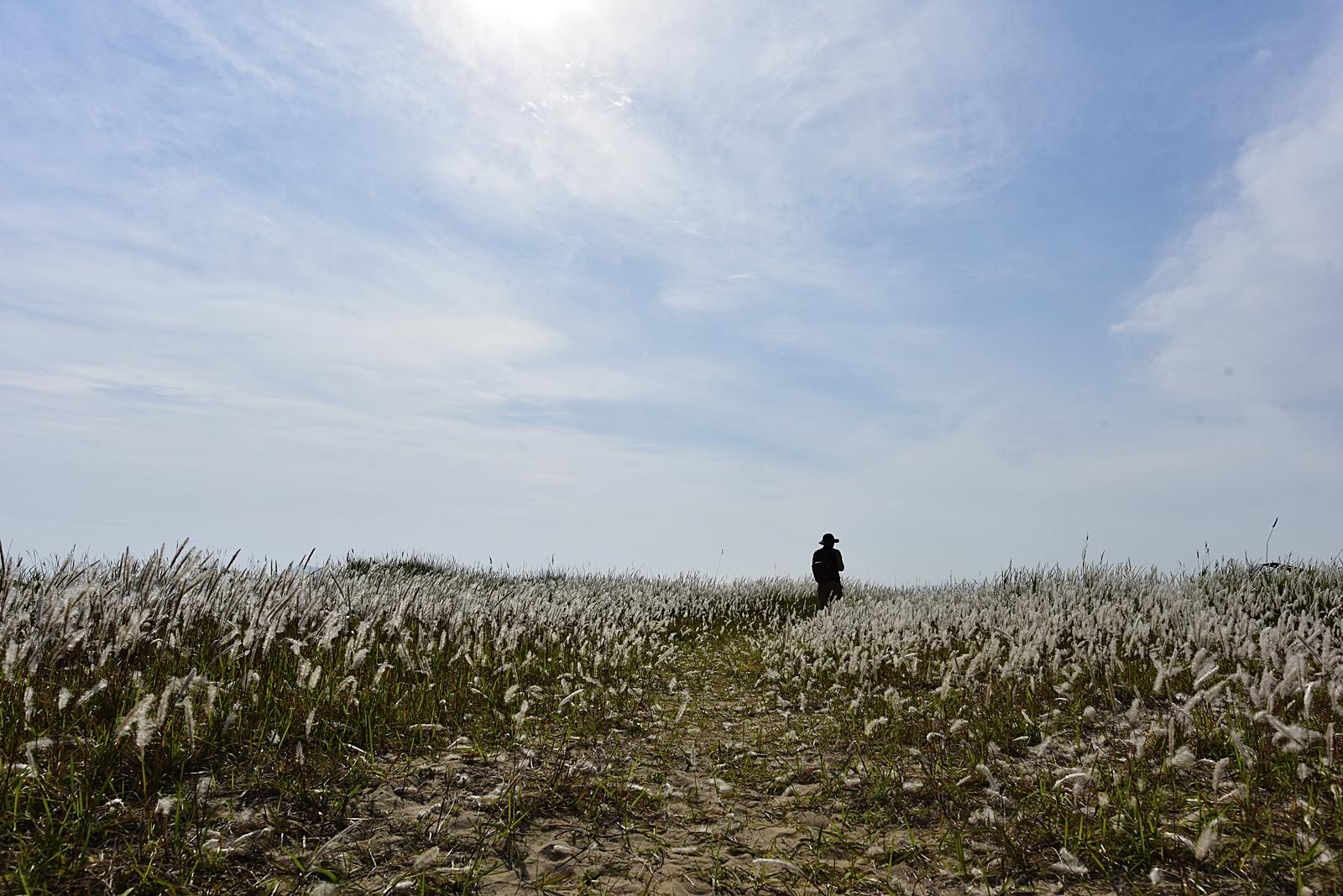 띠가 있는 풍경.JPG