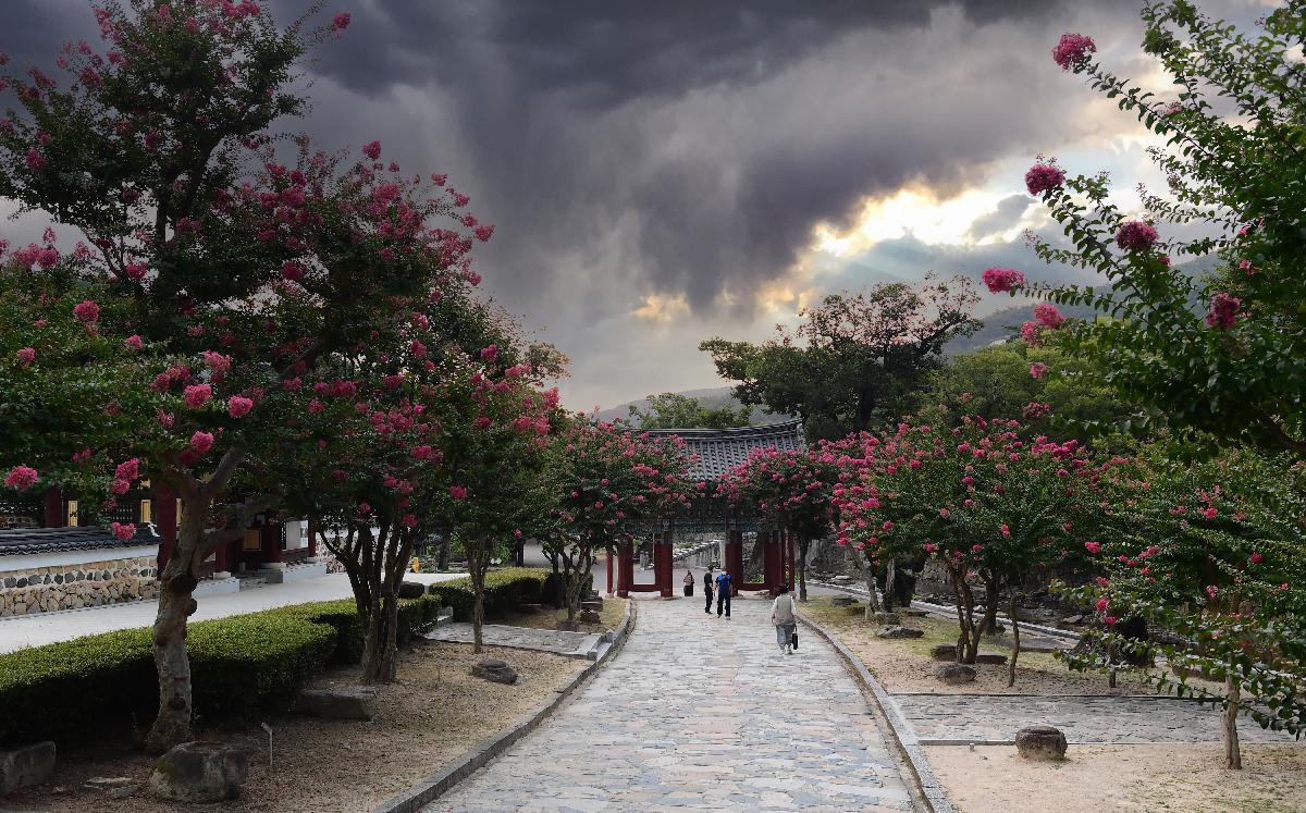 DSC_4293통도사배롱나무.jpg