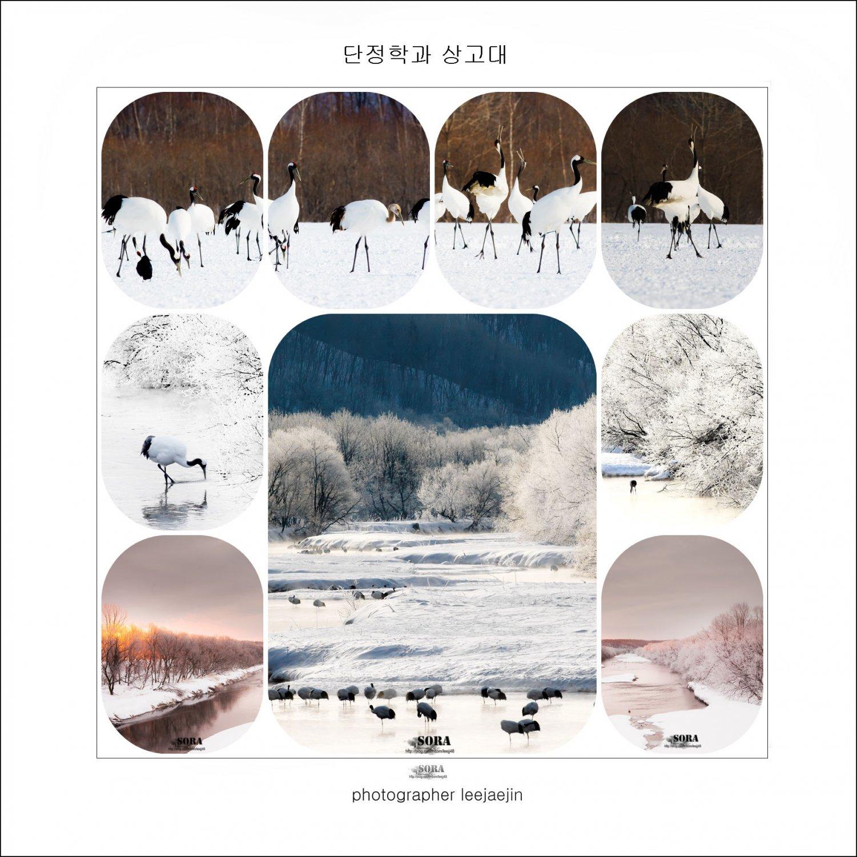 3-200110-단정학-page-풍경2-2.jpg