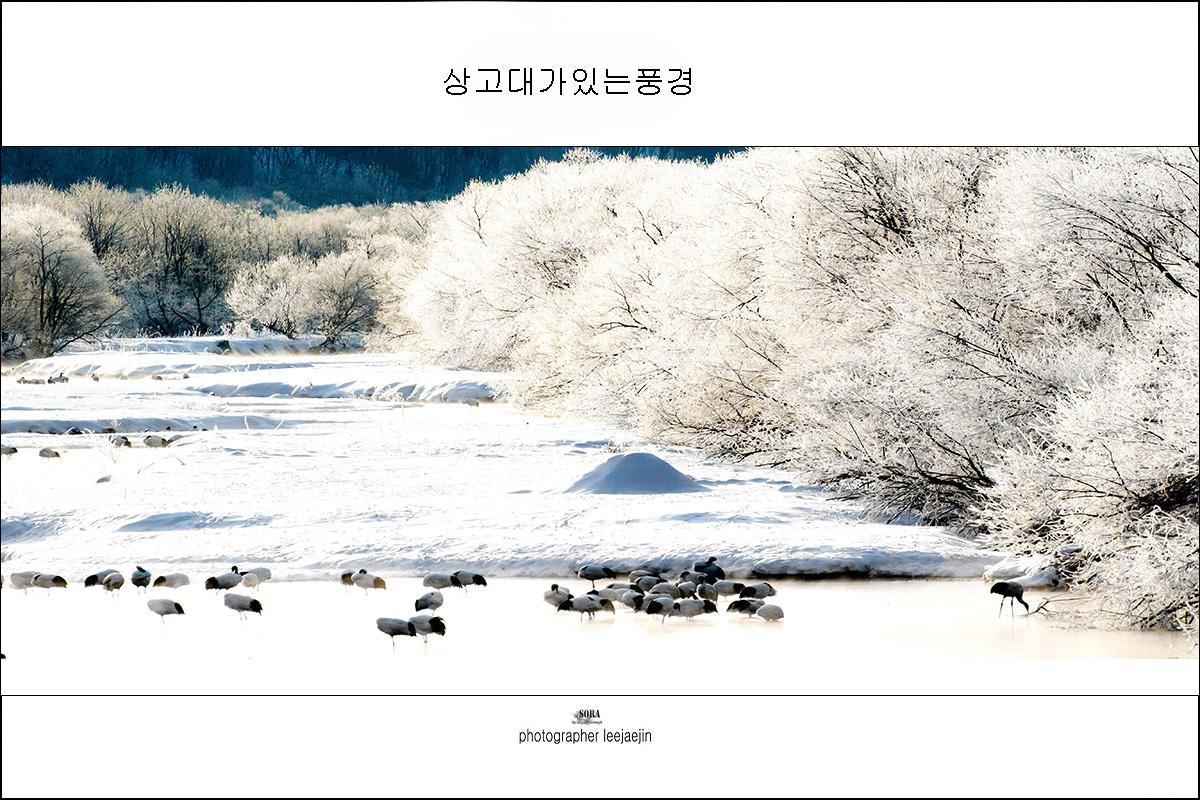 3-200110-2O5A0493-쿠시로설리천의상고대-풍경-2-1.jpg