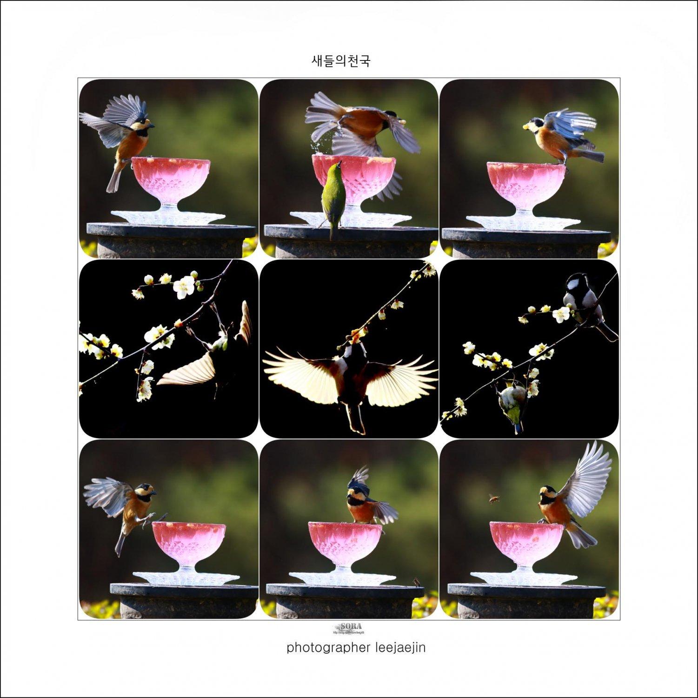 2-210204-새들의천국페이지-2.jpg