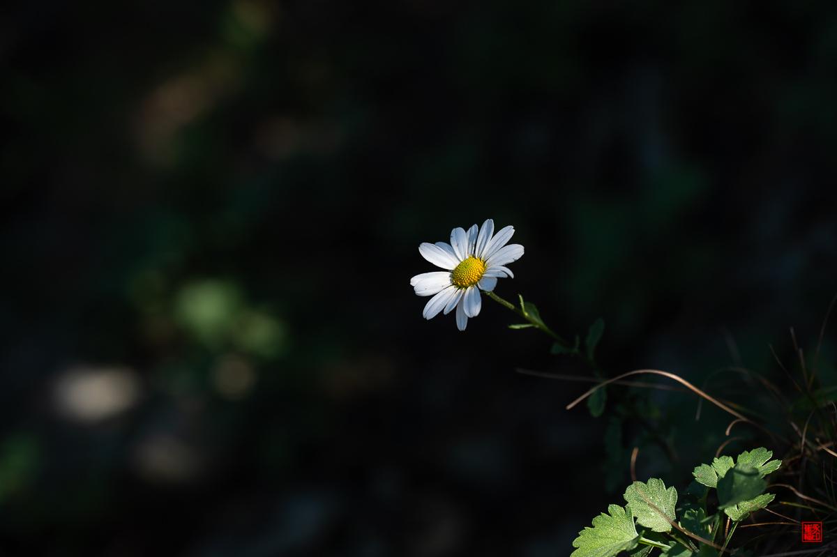 DSC_2546-1.jpg