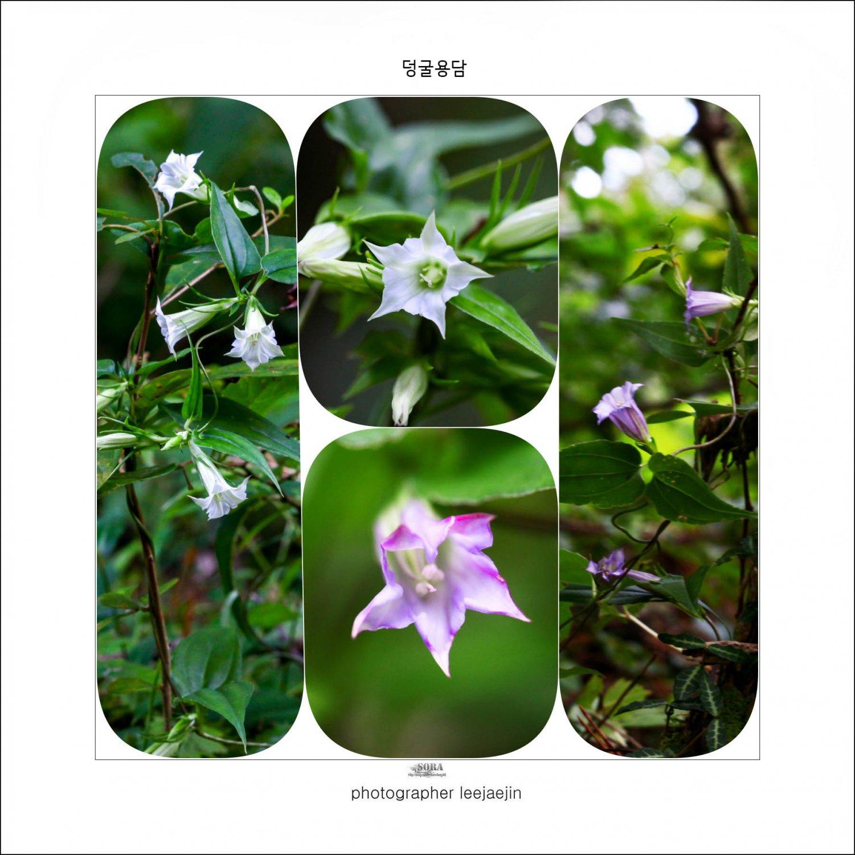 2-210108-덩굴용담콜라주-dlselzk-0108-5.jpg